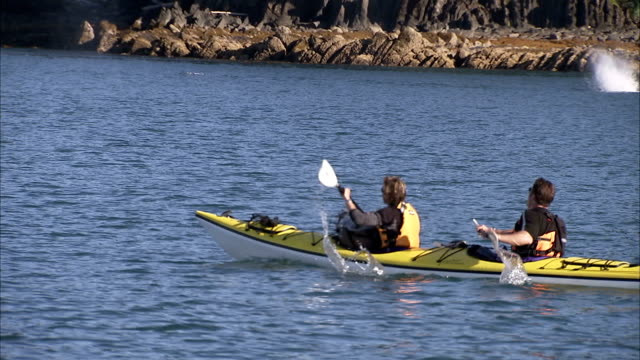 kayakers paddle near humpback whales that surface off an alaskan coast. - cetacea stock videos & royalty-free footage