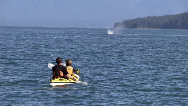 vídeos de stock, filmes e b-roll de kayakers watch as humpback whales blow water from their blowholes. - espiráculo