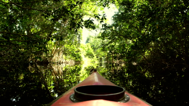 kayaking in the cacao lagoon - mangrove forest stock videos & royalty-free footage