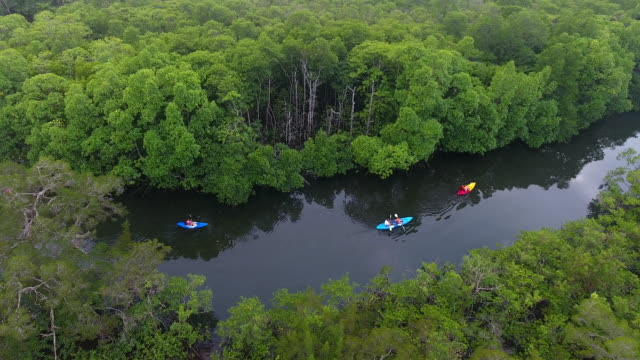 vidéos et rushes de kayaking on river swamp, koh rong island, cambodia - canoë