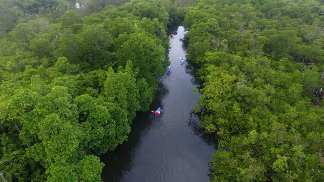 kayaking on river swamp, koh rong island, cambodia - kayak stock videos & royalty-free footage