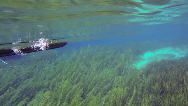 kayaking river - oar stock videos and b-roll footage