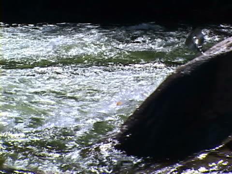 kayaking - 若い男性だけ点の映像素材/bロール