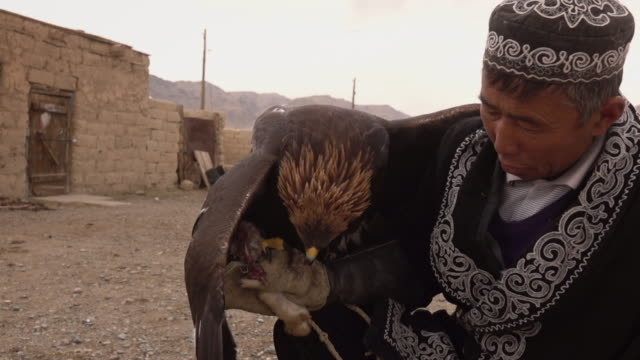kazakh eagle hunter in mongolia with golden eagle at his home - independent mongolia stock videos & royalty-free footage