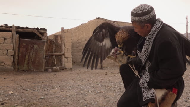 kazakh eagle hunter in mongolia with golden eagle at his home - hunting sport stock videos & royalty-free footage