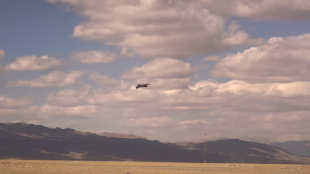 kazakh eagle hunters in mongolia compete at golden eagle festival - golden eagle stock videos & royalty-free footage