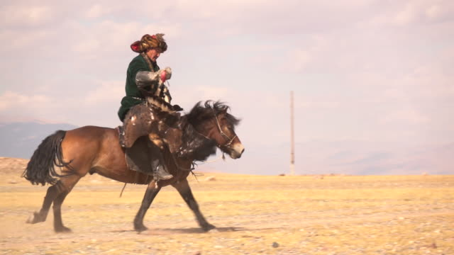 vidéos et rushes de kazakh eagle hunters in mongolia compete at golden eagle festival - aigle royal