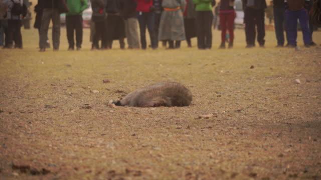 kazakh eagle hunters in mongolia play kokbar game at golden eagle festival - nomadic people stock videos & royalty-free footage