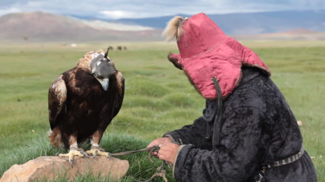 vídeos y material grabado en eventos de stock de kazakh man handling ropes and blindfolded golden eagle by his side - animales en cautiverio