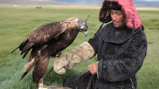 vídeos de stock, filmes e b-roll de kazakh man putting glove on and getting golden eagle over his arm - só um adulto de idade mediana