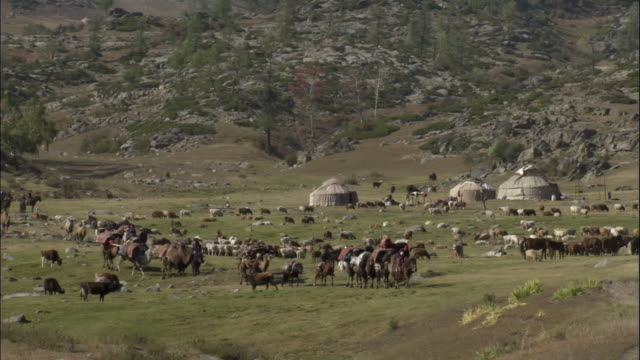 Kazakh yurts/gers and livestock, Kalamaili Nature Reserve, Xinjiang, China