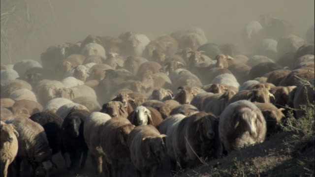 Kazakhs herd sheep through dusty valley, Kalamaili Nature Reserve, Xinjiang, China
