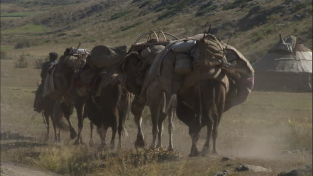 kazakhs lead camel train out of settlement, kalamaili nature reserve, xinjiang, china - convoy stock videos and b-roll footage