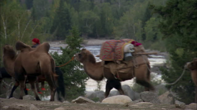 kazakhs ride along river bank leading camel train, kalamaili nature reserve, xinjiang, china - 運ぶ点の映像素材/bロール