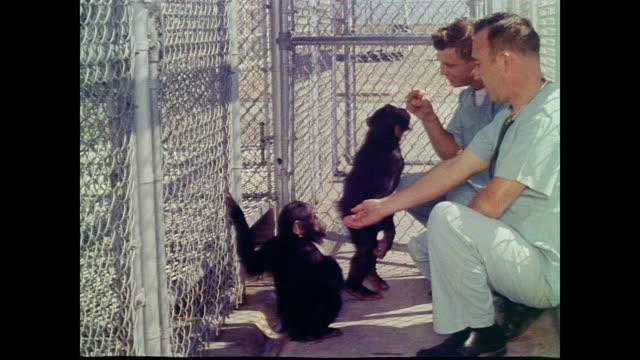 stockvideo's en b-roll-footage met keepers feed peanuts to baby chimpanzees - ruimtemissie