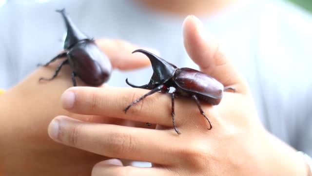 keeping pet beetles - beetle stock videos & royalty-free footage