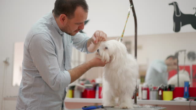 keeping pets feeling and looking good - working animal stock videos & royalty-free footage