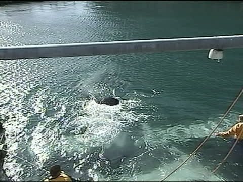 stockvideo's en b-roll-footage met keiko the killer whale returns to iceland; a) iceland: ext keiko the whale swimming into new pen - new not politics