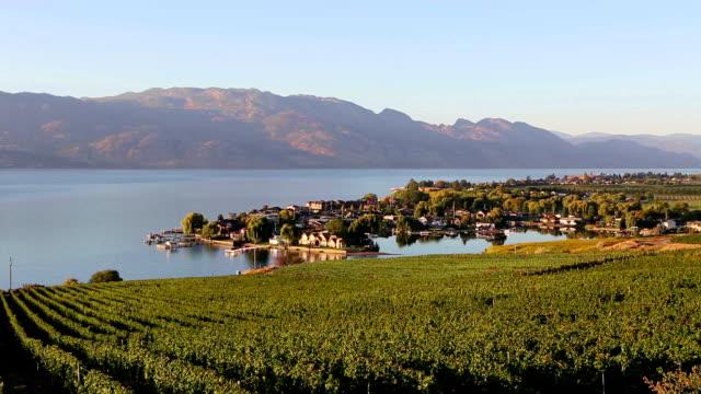 kelowna vineyard winery okanagan valley - british columbia stock videos & royalty-free footage