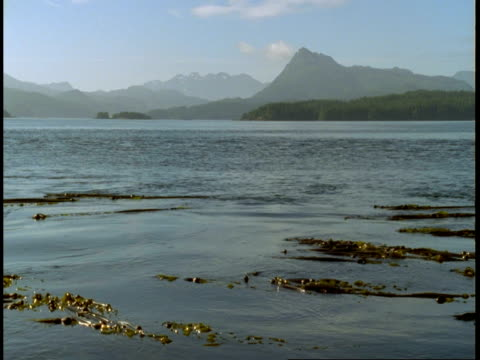 kelp floats on wind-rippled water in telegraph cove. - kelp stock videos & royalty-free footage