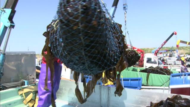 kelp harvesting in hokkaido - 網状点の映像素材/bロール