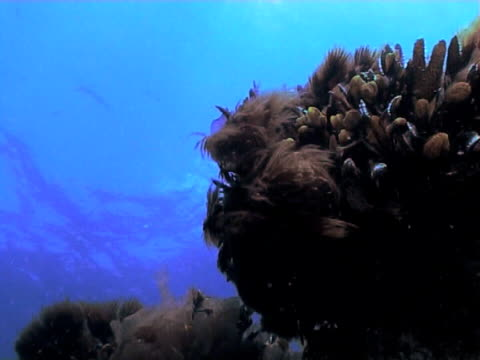 kelp with pan up to blue water - blattfiedern stock-videos und b-roll-filmmaterial