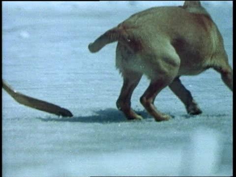 vídeos de stock e filmes b-roll de ken l ration burger dog food commercial - gelo picado