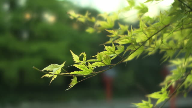 kendo impressions, trees and leaves