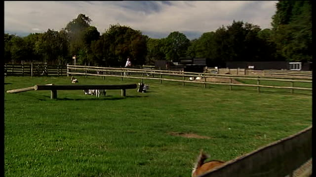 Goats In Paddock Reporter To Camera General Views Of Deserted