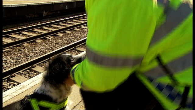 vídeos de stock e filmes b-roll de sergeant neil forsyth interview sot handler playing with sniffer dog various shots team of police officers, some with sniffer dogs, along train... - kentish town