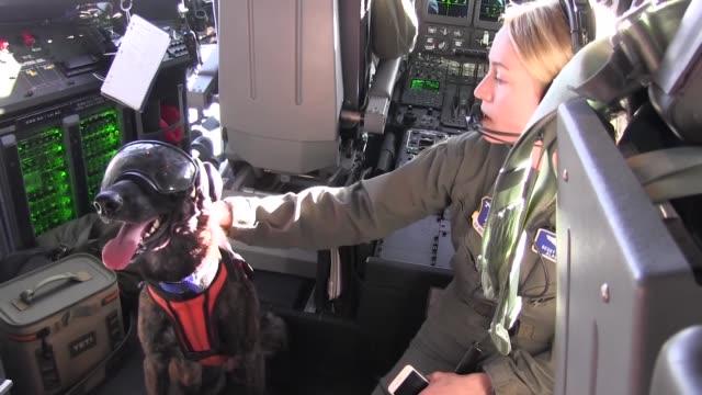 kentucky air national guard special tactics squadron perform open ocean jumpmaster training in alaska. - skill stock videos & royalty-free footage