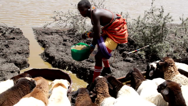 kenya, laikipia district, nanyuki, samburu tribe of kisargei - stahlfass stock-videos und b-roll-filmmaterial