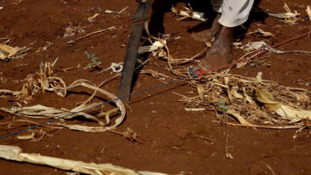 kenya, meru, agriculture, woman planting grain with the help of a machete (heavy knife) - 植える点の映像素材/bロール