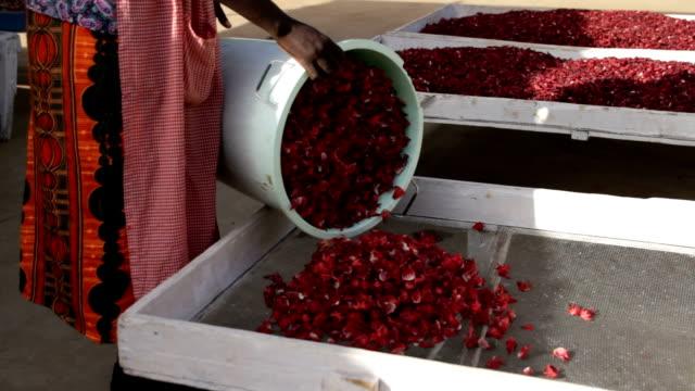 kenya, meru, flower of hibiscus (hibiscus sabdariffa or carcade) are placed to dry - eibisch tropische blume stock-videos und b-roll-filmmaterial