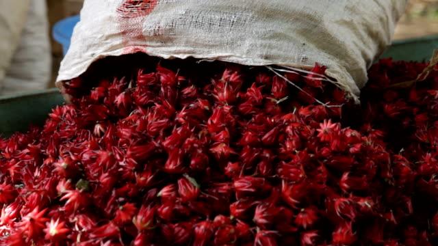 kenya, meru, sack of hibiscus flowers (hibiscus sabdariffa or carcade) are placed to dry. - eibisch tropische blume stock-videos und b-roll-filmmaterial
