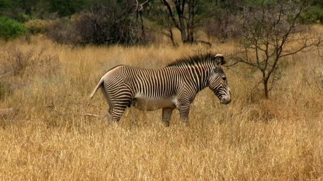 Kenya, Samburu National Reserve