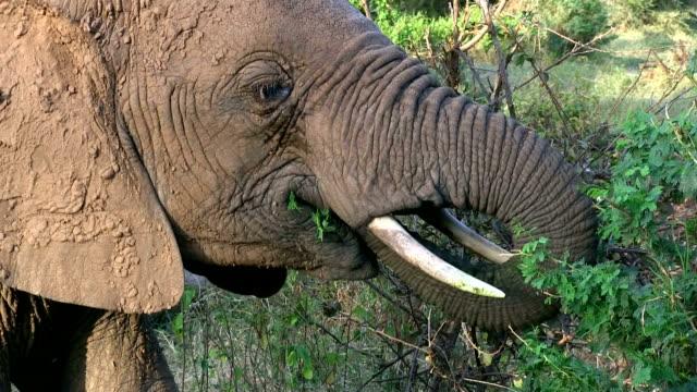 kenya, samburu national reserve - limb body part stock videos & royalty-free footage