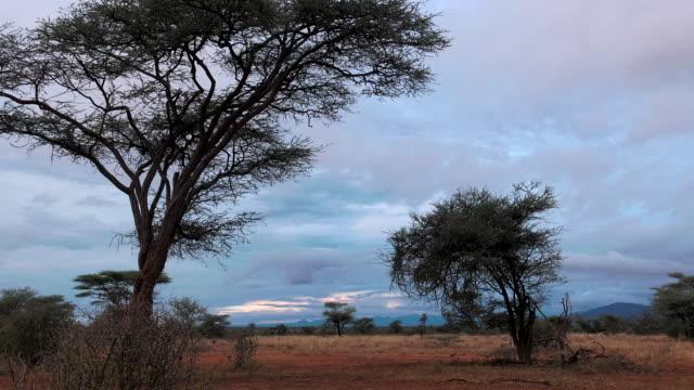 kenya savannah moody sky - サファリ点の映像素材/bロール