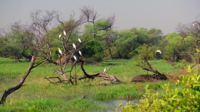 vídeos de stock e filmes b-roll de keoladeo ghana national park formerly known as the bharatpur bird sanctuary in bharatpur, rajasthan, india is a famous avifauna sanctuary that hosts... - planície
