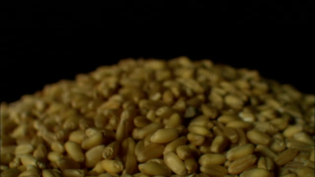 kernels of wheat lie in a pile. - cereale video stock e b–roll