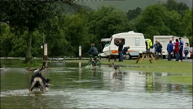 vídeos y material grabado en eventos de stock de keswick: ext dog fetching stick from huge puddle at waterlogged campsite swans swimming in water beside flooded tent at campsite - organismo acuático
