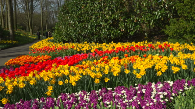 keukenhof gardens, lisse, south holland, netherlands - south holland stock videos and b-roll footage