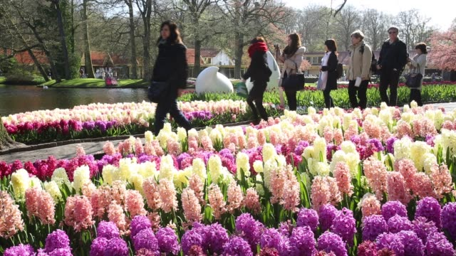 keukenhof gardens, the most famous spring garden in the world, lisse, netherlands. - plant bulb stock videos & royalty-free footage