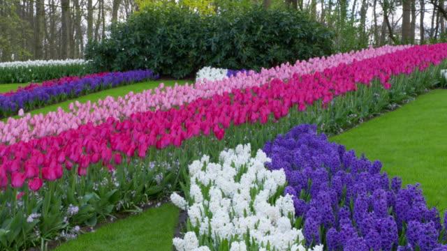 vídeos y material grabado en eventos de stock de keukenhof gardens. tulips and hyacinths in formal garden. lisse, south holland, netherlands. - formal garden