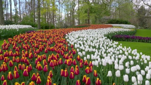 vídeos de stock, filmes e b-roll de keukenhof gardens. tulips in formal garden. lisse, south holland, netherlands. - formal garden