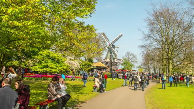 Keukenhof tulips farm season in Netherland Timelapse