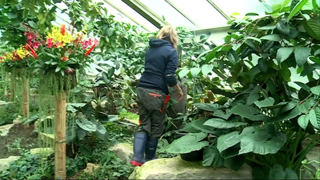 kew gardens prepares for orchid festival england london kew gardens ext greenhouse as rain falls rain falling into pond gardener working inside... - botanical garden stock videos & royalty-free footage