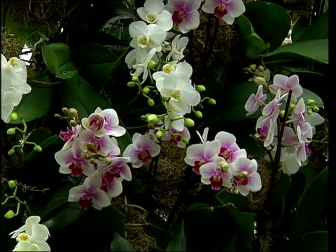 Tropical plants on display at exhibition Gardener pruning plants / General views and close ups of flowers including orange hanging orchid purple...