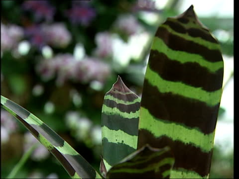tropical plants on display at exhibition; more general view of plants on display including striped green maranta and circular display of flowers /... - キュー点の映像素材/bロール