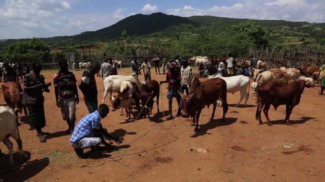 key afer weekly market- cows and tribal men in the market - weekly stock videos and b-roll footage